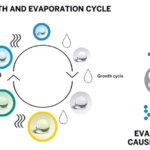 Growth and Evaporation Cycle