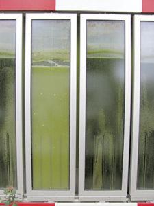 algae windows