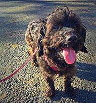 vivian the rescue pup